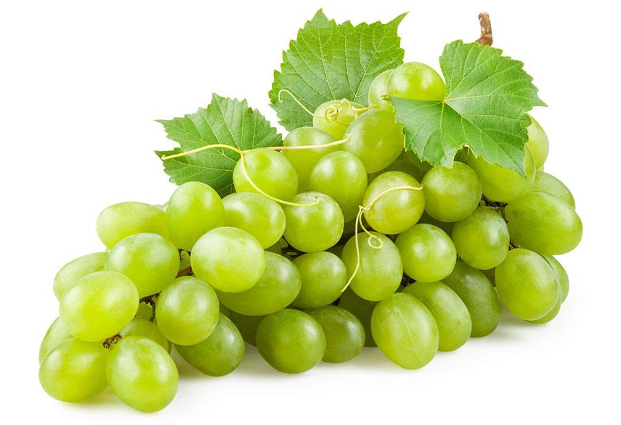 uva-bianca-1
